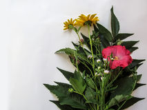 Bouquet of wild plants flowers  on white background Stock Images
