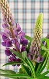 Bouquet of wild purple lupins stock photos