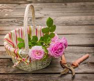 Bouquet of wild rose in vintage style on white basket Royalty Free Stock Image