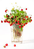 Bouquet of wild strawberries Royalty Free Stock Photography