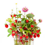 Bouquet of wild strawberries Stock Image
