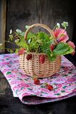 Bouquet of wild strawberries in a basket Royalty Free Stock Photography