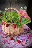 Bouquet of wild strawberries in a basket Stock Image