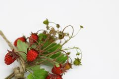 Bouquet of wild strawberry berries close-up royalty free stock photo