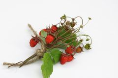 Bouquet of wild strawberry berries close-up royalty free stock images