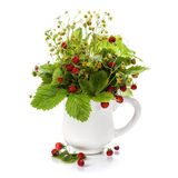 Bouquet of wild strawberry Stock Photos
