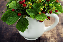 Bouquet of wild strawberry Royalty Free Stock Photos