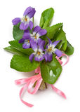 Bouquet of wild violets Stock Image