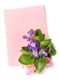 Bouquet of wild violets Stock Photo