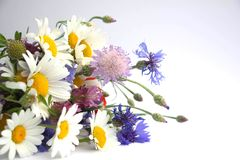 A bouquet of wild wildflowers is laying on a white background. Bouquet of daisies, cornflowers, poppy and clover royalty free stock photo