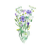 Bouquet of wildflowers and cornflowers Stock Photos