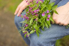 A bouquet of wildflowers in hand Royalty Free Stock Photo