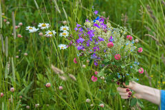 Bouquet of wildflowers in the hand of girl on background of summer meadow with chamomiles, clover. Concept of seasons Royalty Free Stock Photo