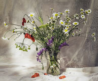 A bouquet of wildflowers. In a sunny summer day Royalty Free Stock Photo