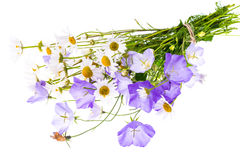 Bouquet of wildflowers on white background Royalty Free Stock Photo