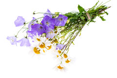 Bouquet of wildflowers on white background Stock Photography