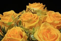 Bunch of yellow roses. Bouquet of wonderful yellow roses Royalty Free Stock Images