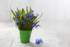 Bouquet of wood squill. Bouquet of wood squill (Scilla siberica) flowers in green pail against a old wooden plank. Shallow DOF. Selective focus royalty free stock images