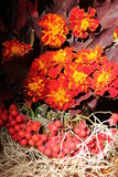 Bouquet& x28;autumn& x29; 免版税库存照片