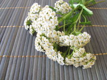 Bouquet of yarrow Royalty Free Stock Images