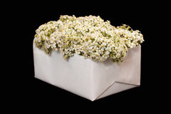 Bouquet from a yarrow in a white box on a black background. Bouquet from a yarrow in a white box on black background royalty free stock images