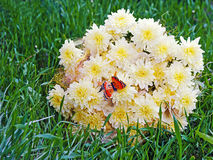 Bouquet from yellow asters with butterfly on green grass. Royalty Free Stock Images