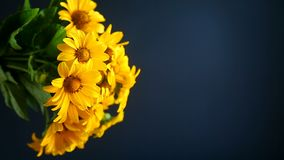 Bouquet of yellow big daisies. On black background