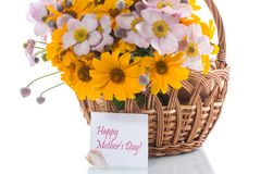 Bouquet of yellow big daisies. Isolated on white background Royalty Free Stock Photography