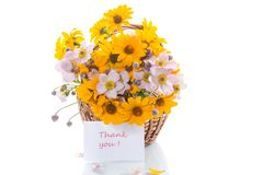Bouquet of yellow big daisies. Isolated on white background Royalty Free Stock Image