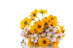 Bouquet of yellow big daisies. Isolated on white background Stock Images
