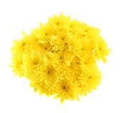 The bouquet of yellow chrysanthemums Royalty Free Stock Photos