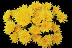 Bouquet of yellow chrysanthemums  on a black Royalty Free Stock Image
