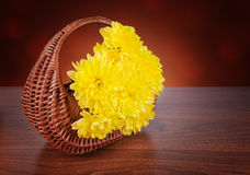 A bouquet of yellow chrysanthemums in a wicker basket Royalty Free Stock Photography