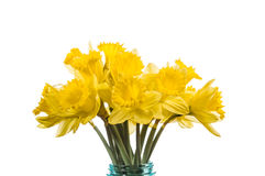 Bouquet of yellow daffodil flowers in a jar Royalty Free Stock Photography