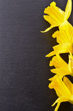 Bouquet of yellow daffodils. Isolated on black background Stock Image