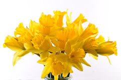 Bouquet of yellow daffodils. Isolated on white background Royalty Free Stock Photography