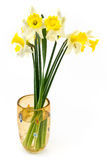A bouquet of yellow daffodils narcissus Royalty Free Stock Image