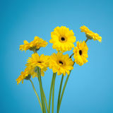 Bouquet of yellow daisies Stock Image