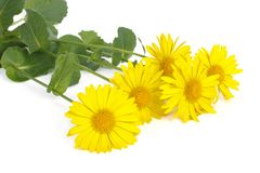 Bouquet of yellow daisies isolated on white Stock Photos