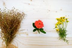3 Bouquet of Yellow Daisies ,Red Rose,Baby`s Breath stock photo