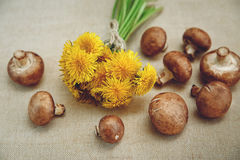 Bouquet of Yellow Dandelions,Fresh Mushrooms on the Linen Texture Tablecloth.Autumn Garden's Background Royalty Free Stock Photography