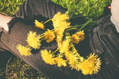 Bouquet of yellow dandelions on the girls legs. In the green park Stock Photography