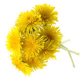 Bouquet of yellow flowers. Royalty Free Stock Images