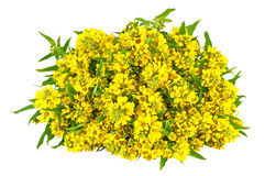 Bouquet of yellow flowers Royalty Free Stock Image