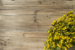 Bouquet of yellow flowers buttercups Royalty Free Stock Images