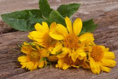 Bouquet of yellow flowers decorative daisies Stock Images