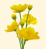 Bouquet of yellow flowers. Stock Images