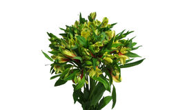 Bouquet of yellow flowers. Isolated Stock Image
