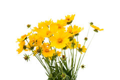 A bouquet of yellow flowers Stock Photos