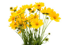 A bouquet of yellow flowers Royalty Free Stock Photo